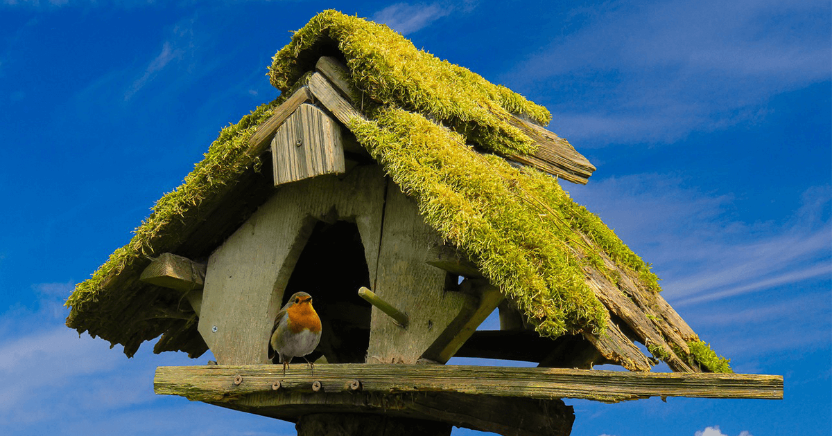 Puppensachen Vogelhaus